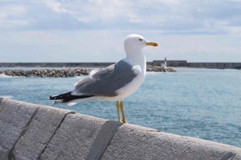 Seagul Sète France