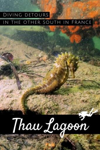 Seahorses - Scuba diving in Thau Lagoon France