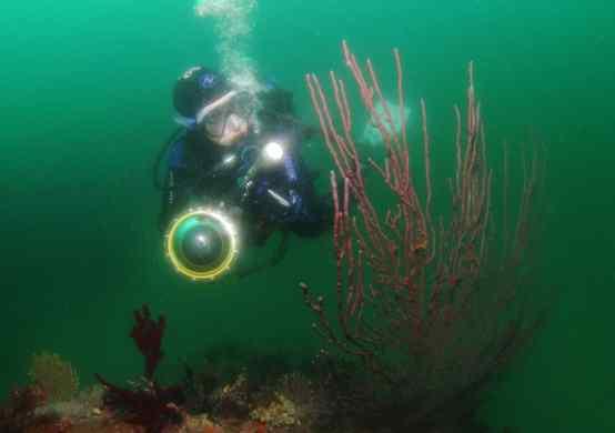Scuba diving in Koganezaki Izu Peninsula Japan