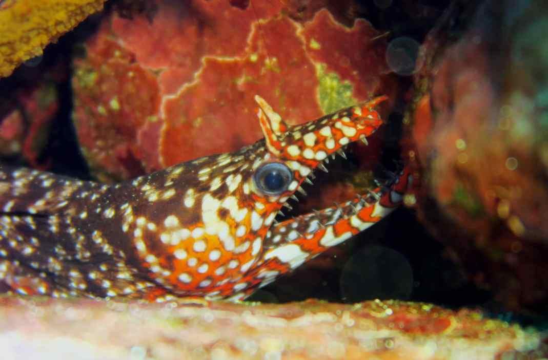 scuba diving in IOP Japan