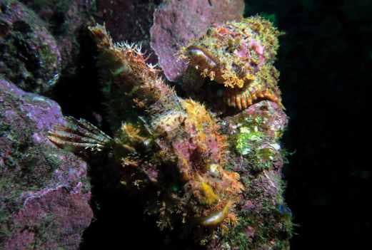 wreck diving in Atami Izu Peninsula Japan