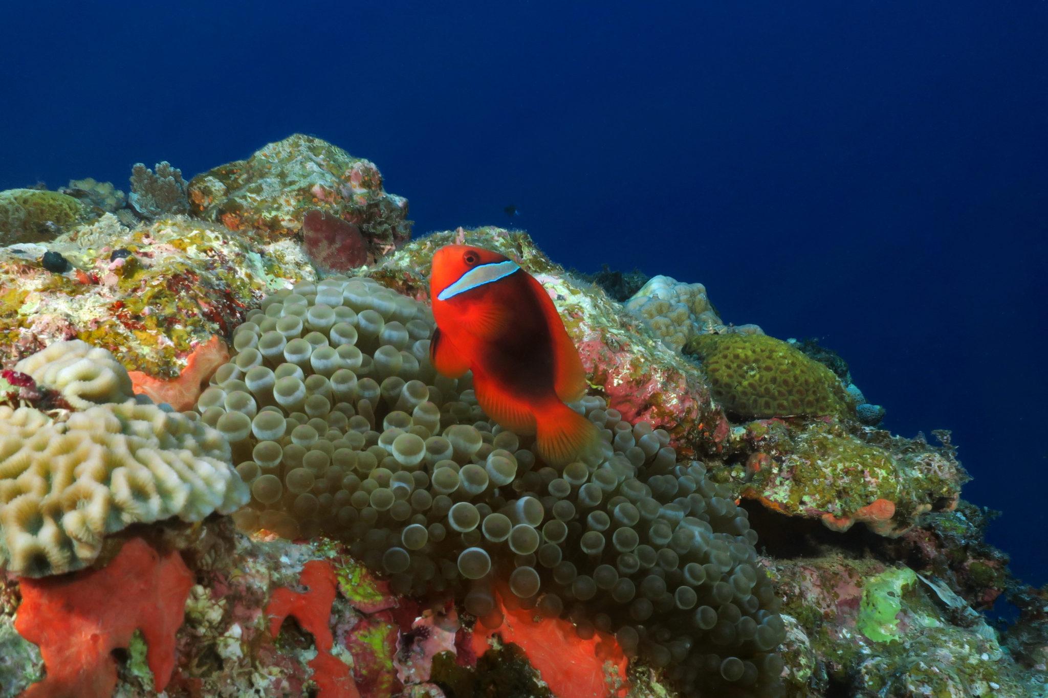 Scuba diving Kerama National Park Okinawa Japan