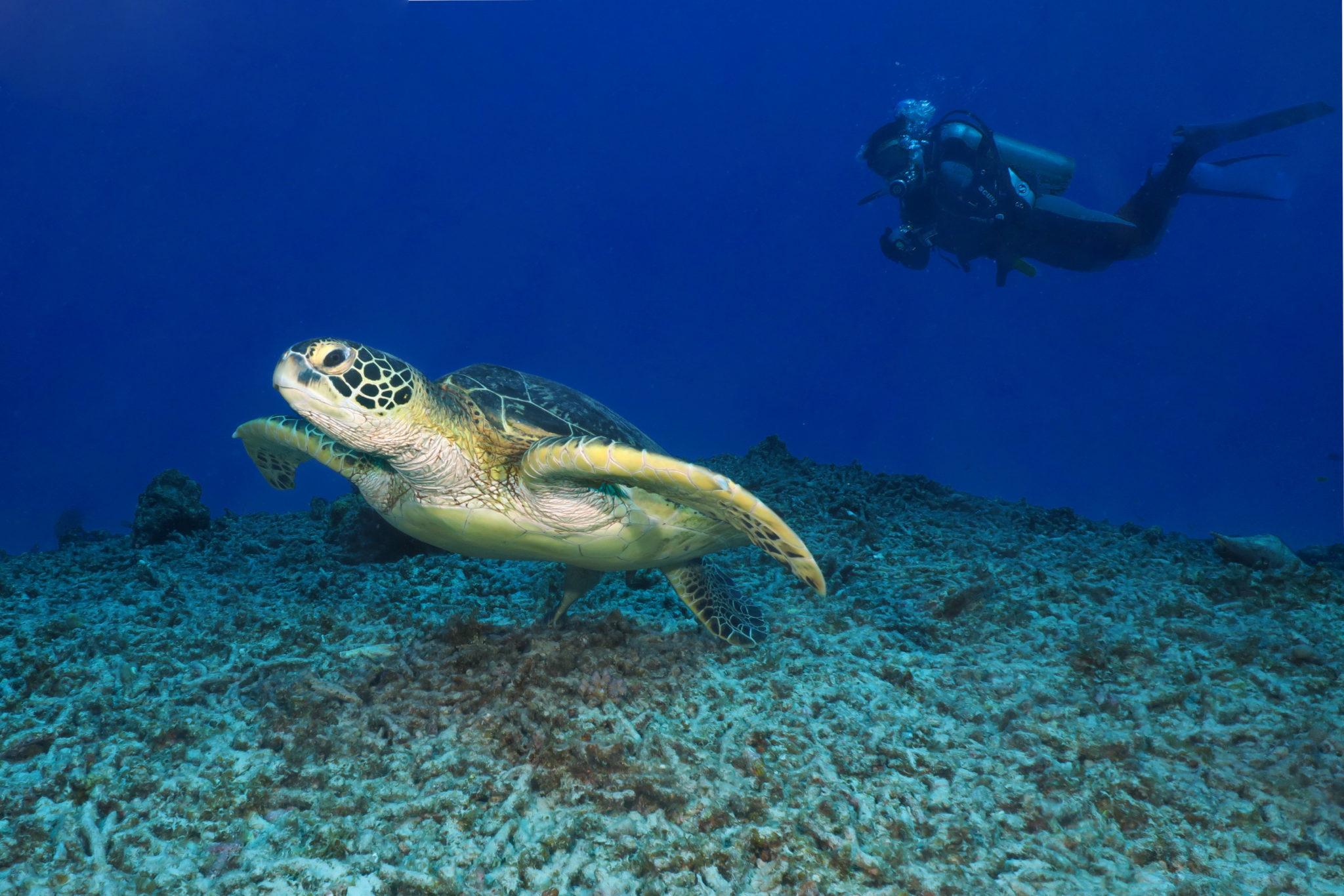 Plongée Parc National des Keramas Okinawa Japon