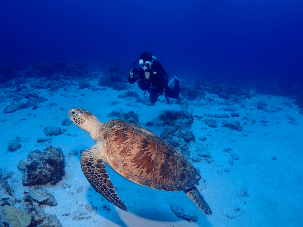 Scuba diving in Okinawa - Turtle Kerama Islands - Honu Honu Divers - Plongée à Okinawa