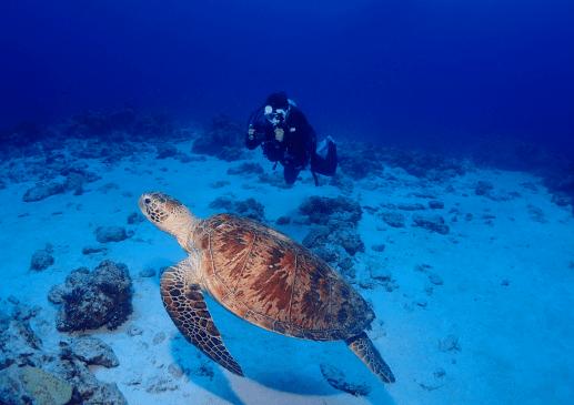 Scuba diving in Okinawa - Turtle Kerama Islands - Honu Honu Divers - Plongée à Okinawa