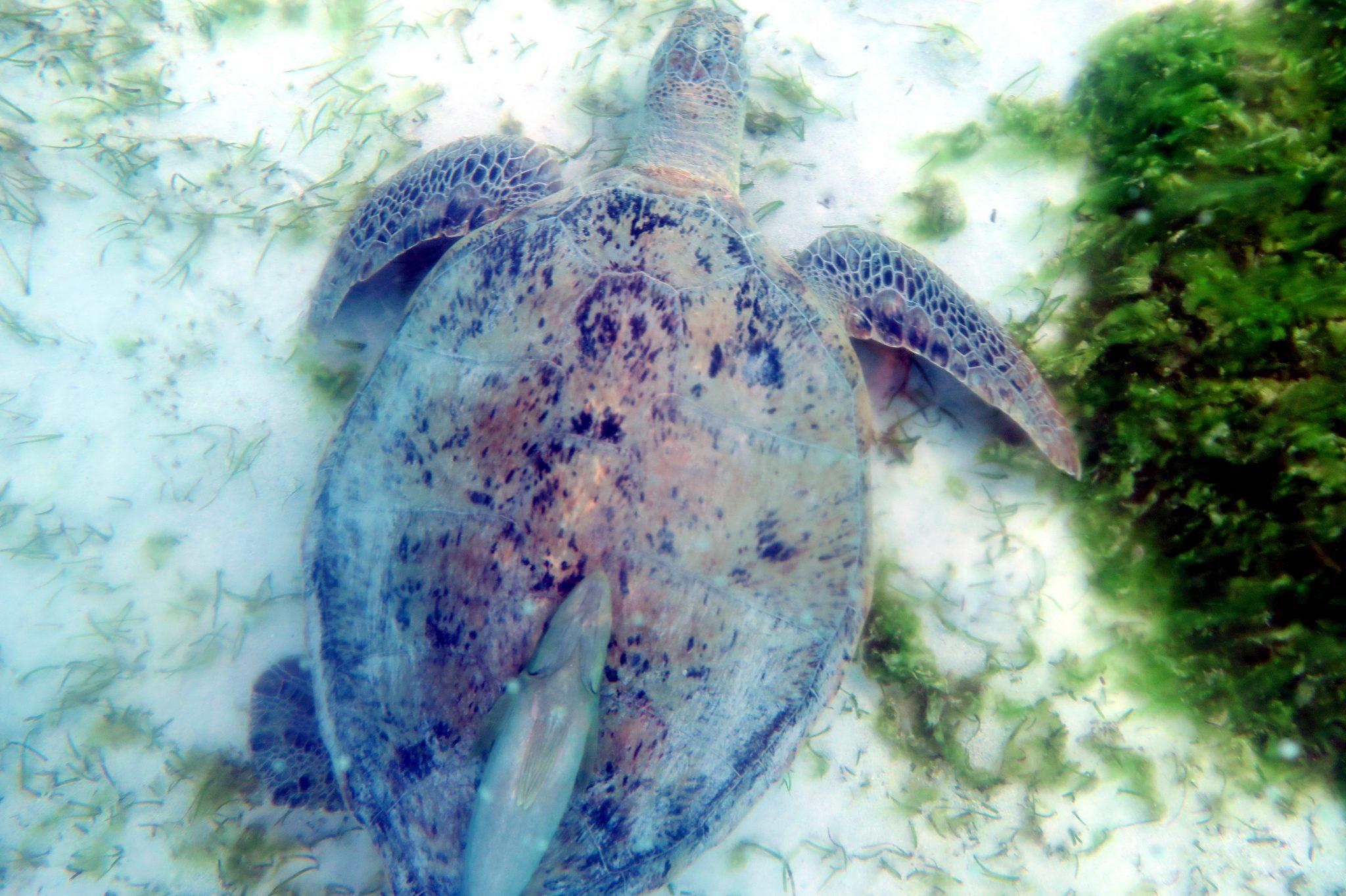 snorkelling Poe Lagoon Deva Domain Bourail New Caledonia