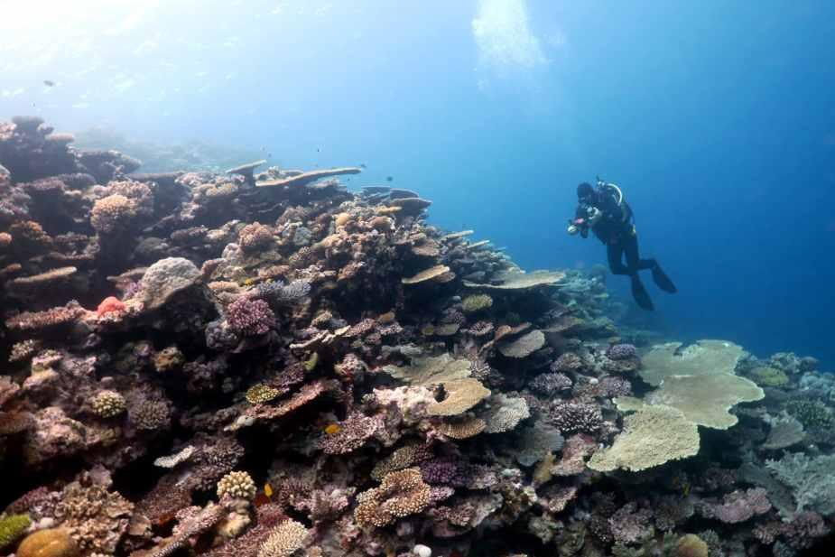 Scuba diving in Koumac New Caledonia Lagoon