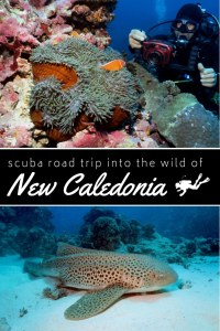 scuba road trip new caledonia