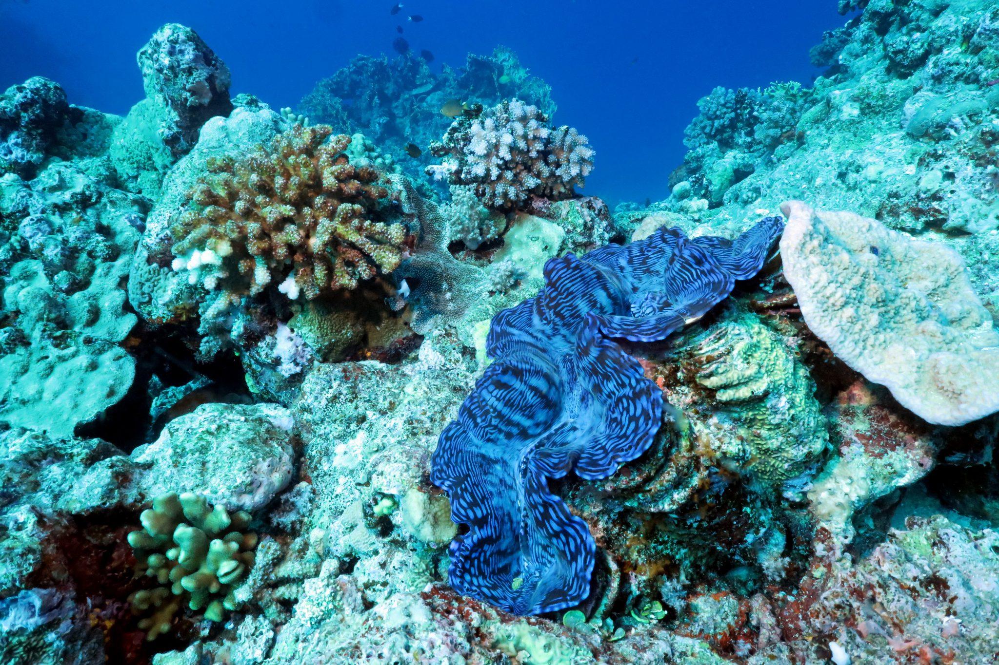 scuba diving Lifou New Caledonia