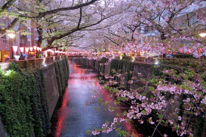 Nakameguro River Sakura in Tokyo Japan