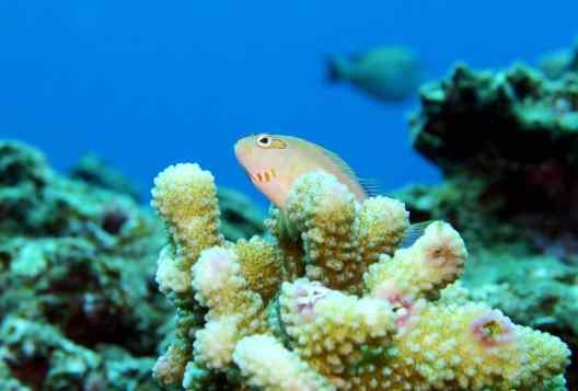 Kuroshima Scuba diving Ishigaki Okinawa Japan