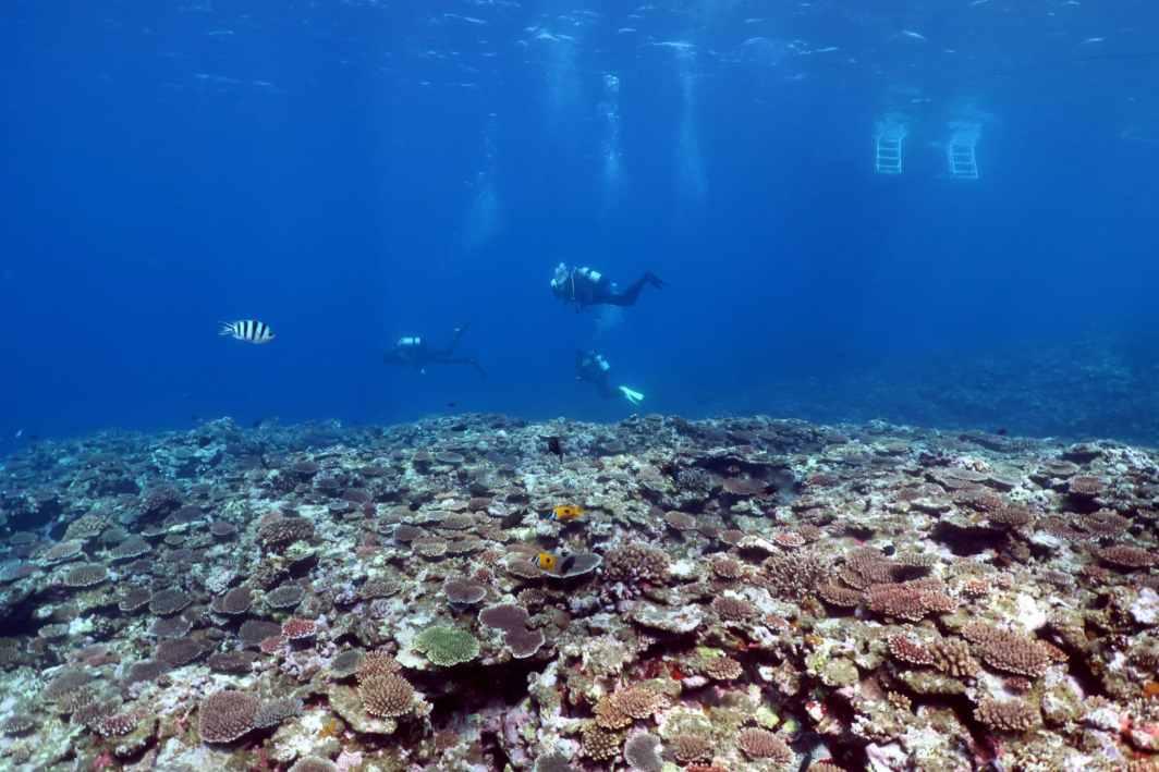 Sakieba Bay corals Scuba diving Ishigaki Okinawa Japan