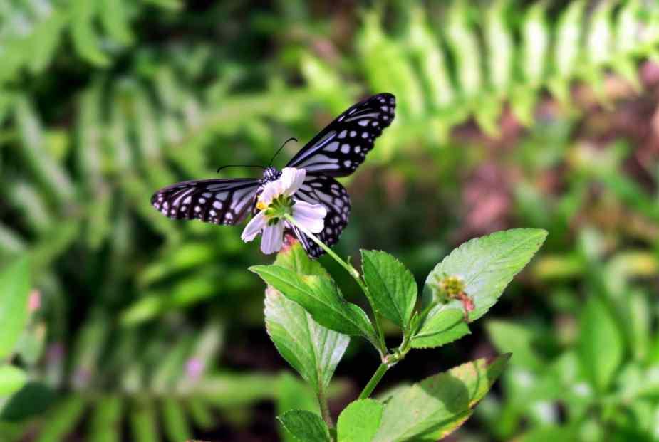 Butterfly Banna Park Ishigaki Okinawa Japan