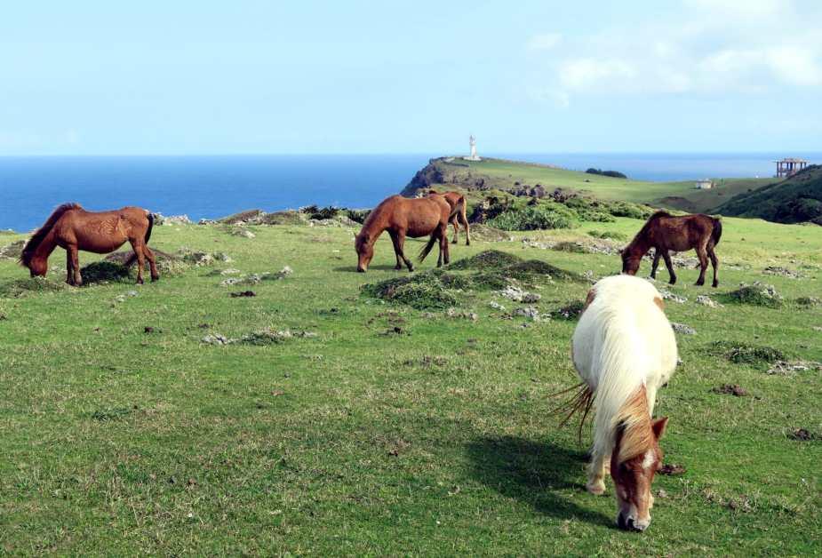 chevaux de Yonaguni au cap Agarizaki Okinawa Japon