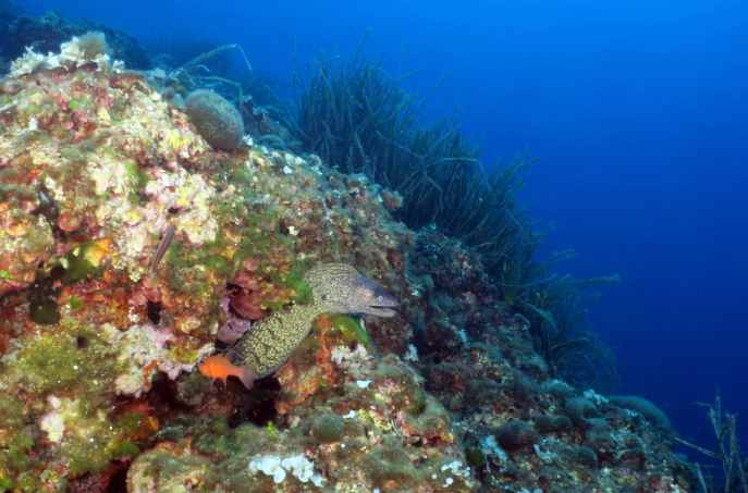 Scuba diving in Nice Villebranche Bay French Riviera