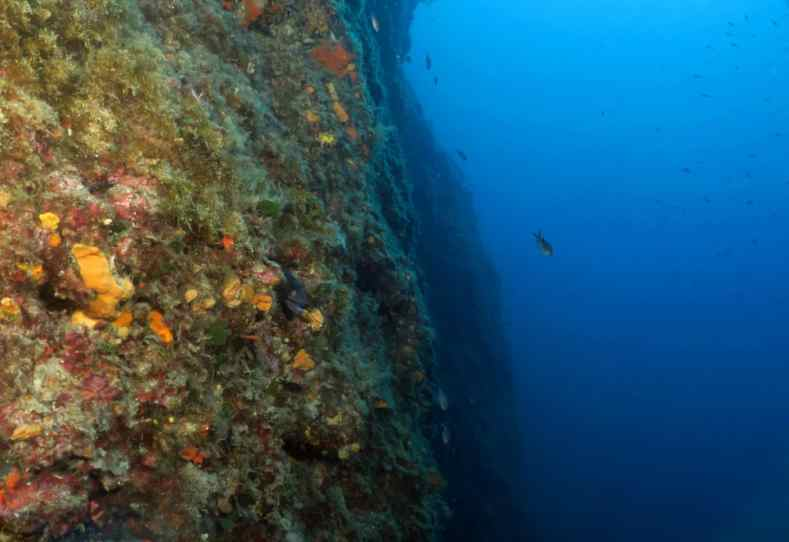 Scuba diving in Nice Villebranche Bay French Riviera