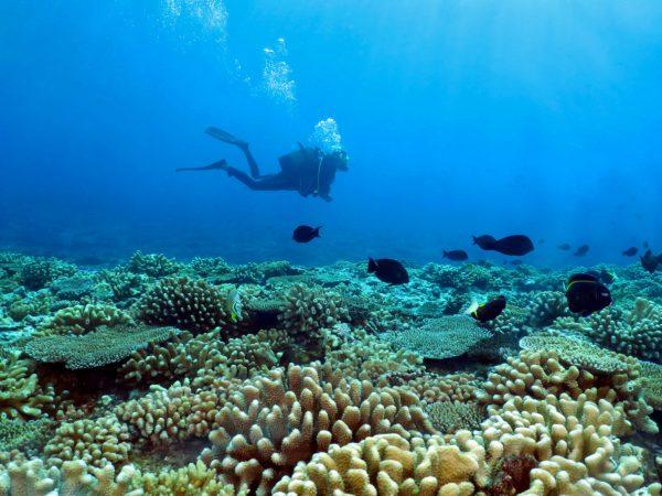 Diving Plongée Tahiti