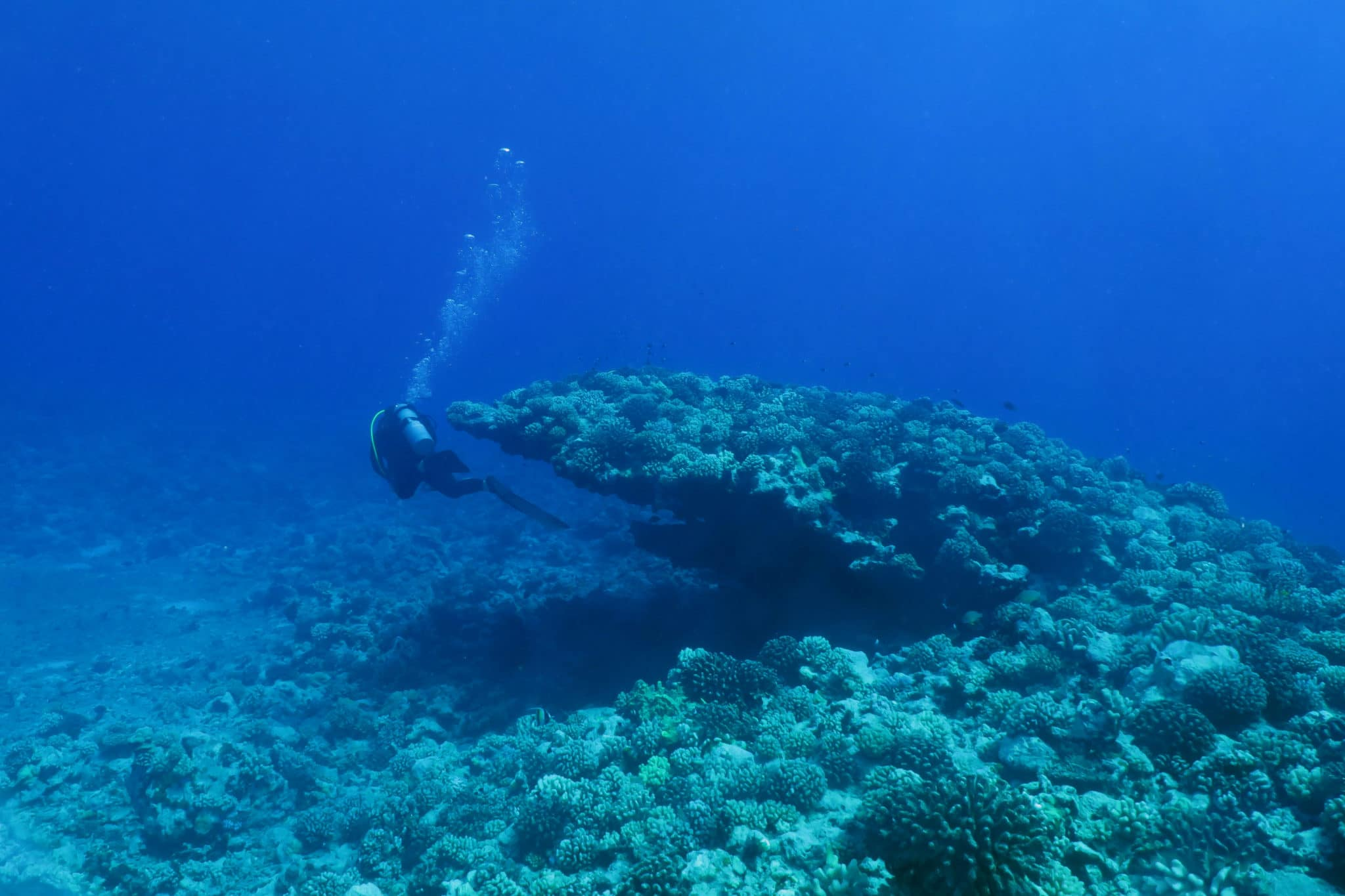 Scuba diving in Moorea