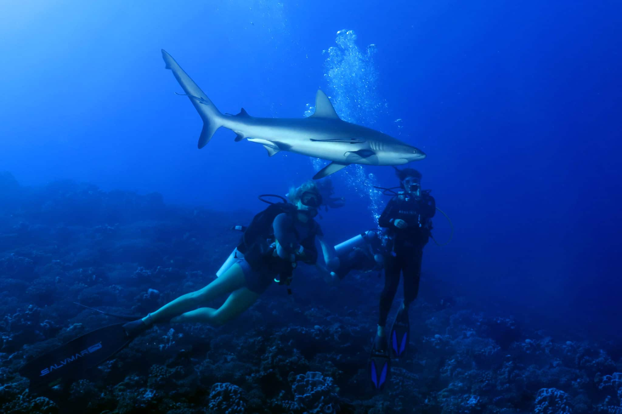 Shark Diving in Fakarava Tuamotu French Polynesia