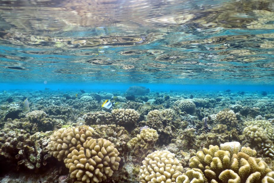 snorkelling at Tetamanu