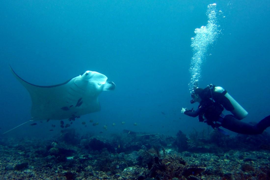 Scuba diving in Komodo