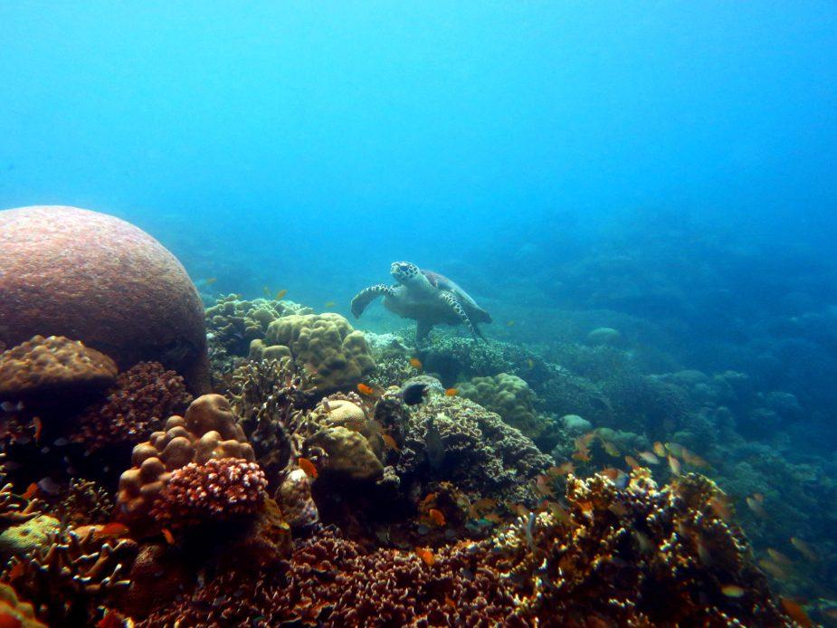 Turtle Pescador Island Philippines