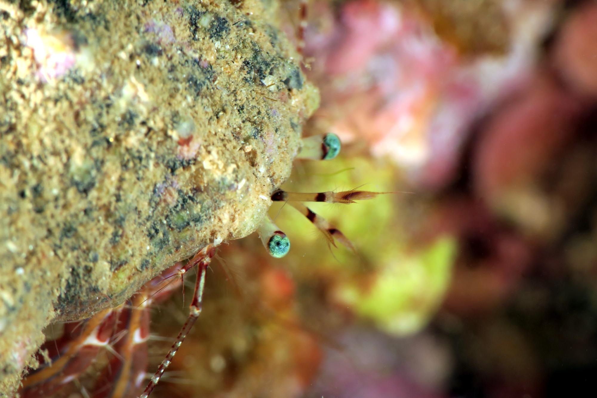 Diving in St Raphael - Lion de Mer - Esterel