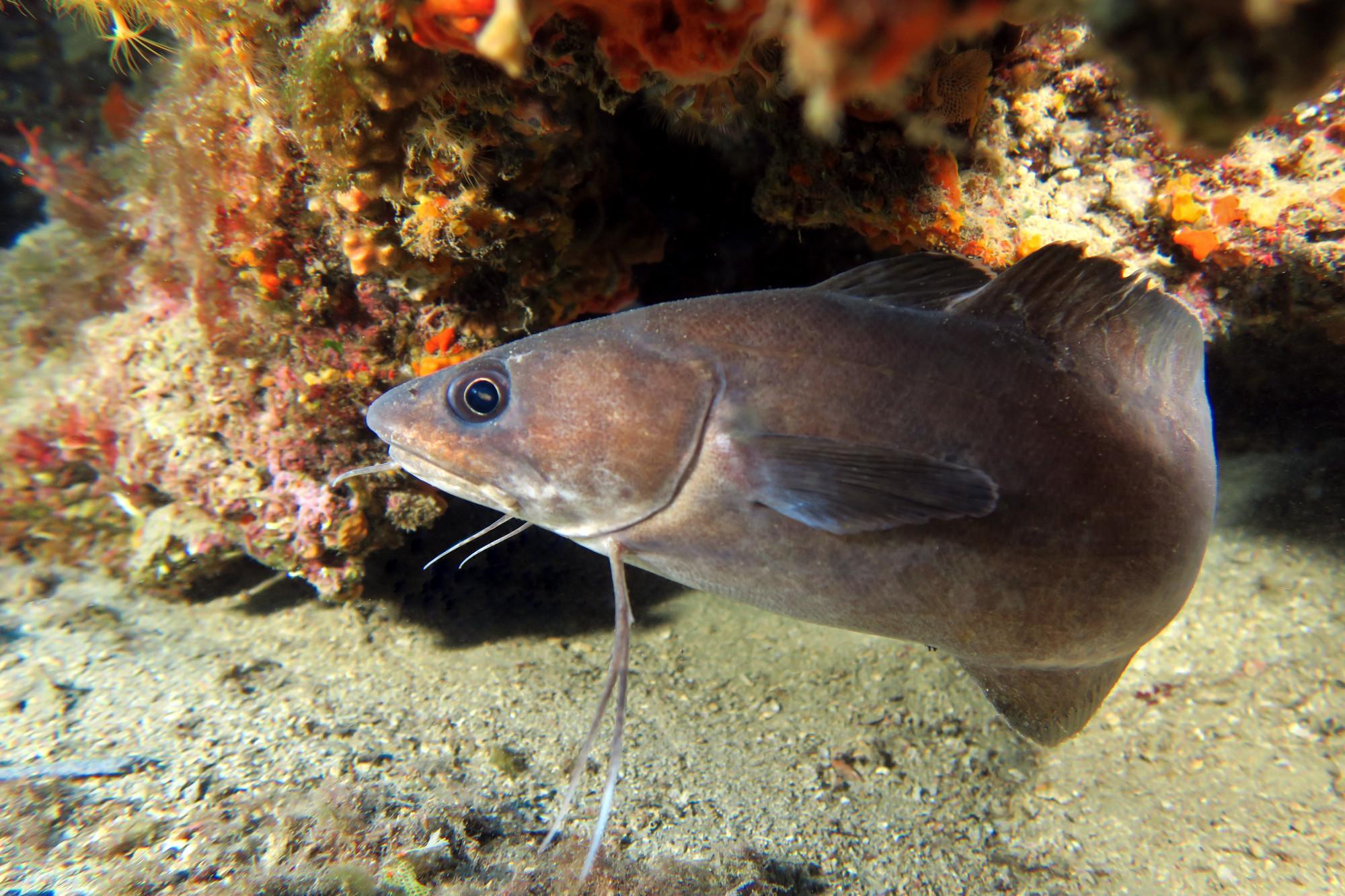 Diving in Menton