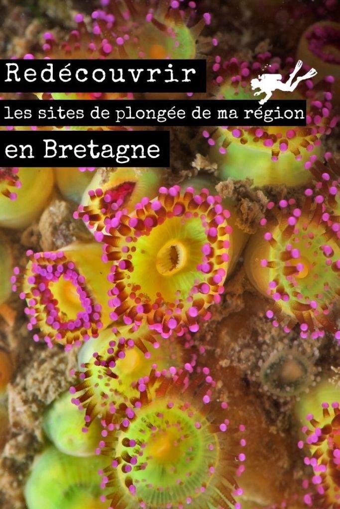 Redécouvrir les sites de plongée de ma région en Bretagne pin1