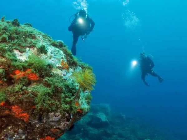 Diving Toulon