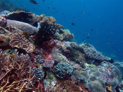 colourful coral Komodo Indonesia