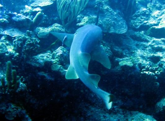 Scuba diving Great Blue Hole Belize