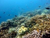Panagsama coral reef Moalboal Cebu Philippines