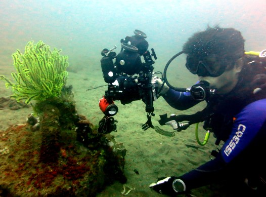 Muck diving Dauin Philippines