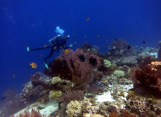 scuba diving Coral Menjangan Island Bali Indonesia