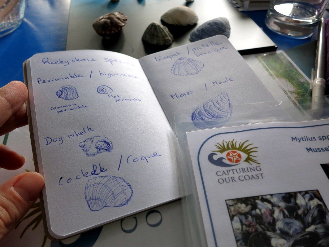 Capturing our Coast rock shores species study