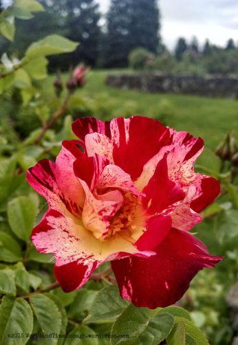 spokane rose hill