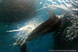 My best shot of this dolphin that was leaping around Abbott Oceanarium.