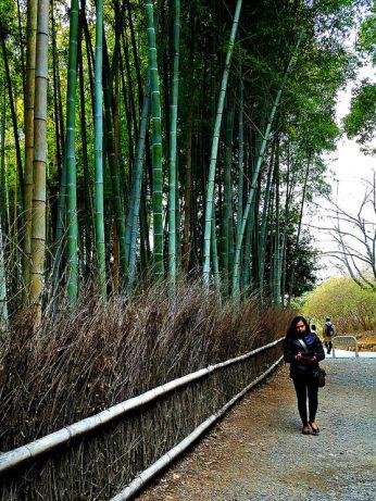 Entering the bamboo