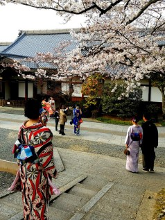 They may be tourists dressed in kimonos, but they sure make lovely photos.