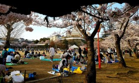 Hanami, or cherry blossom viewing parties, are popular at Himeji.