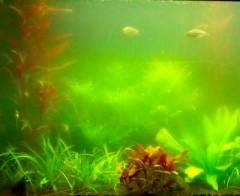помутнела вода в аквариуме