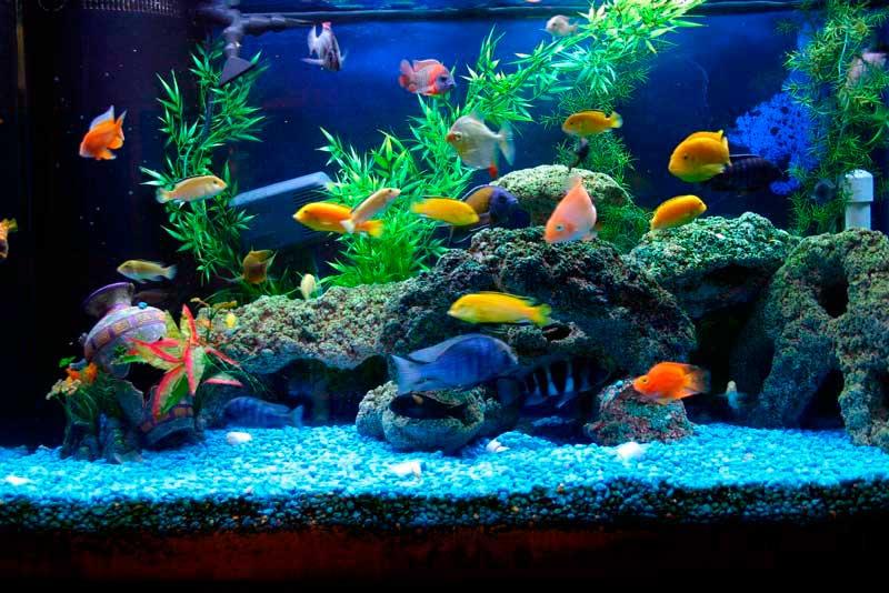 Аквариумы для рыбок в картинках и фото