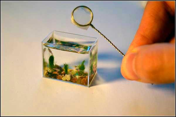 smallest-aquarium