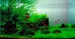 freshwater-aquarium