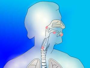 airway collagen affects breathing. Image by OpenClipart-Vectors from Pixabay