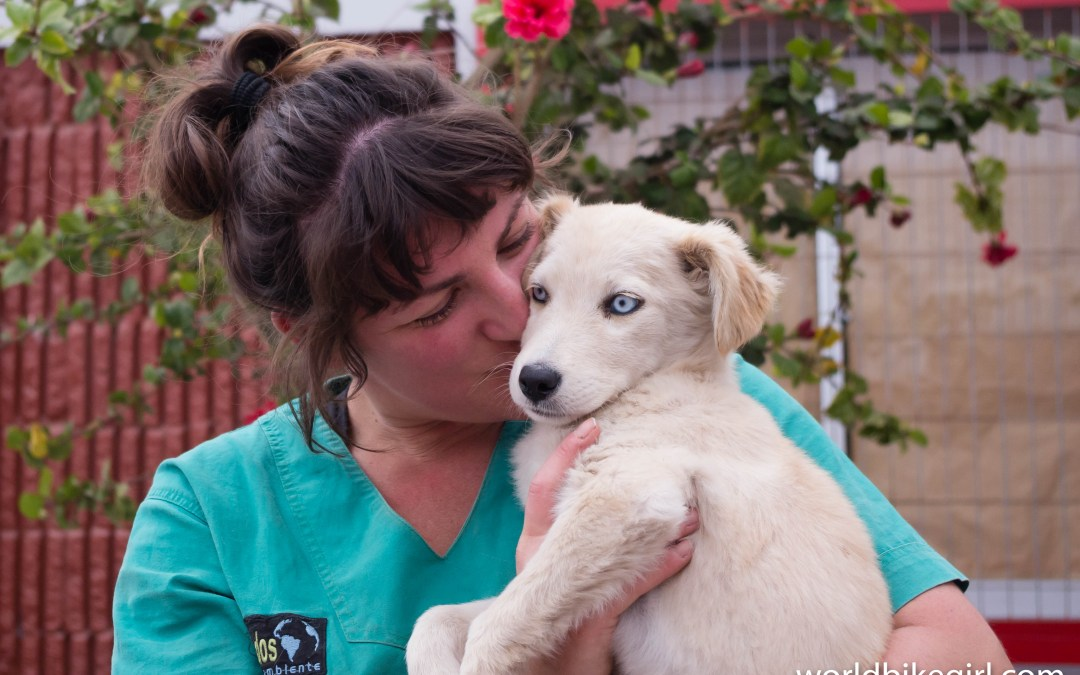 The Dog Rescue Ride Across South America
