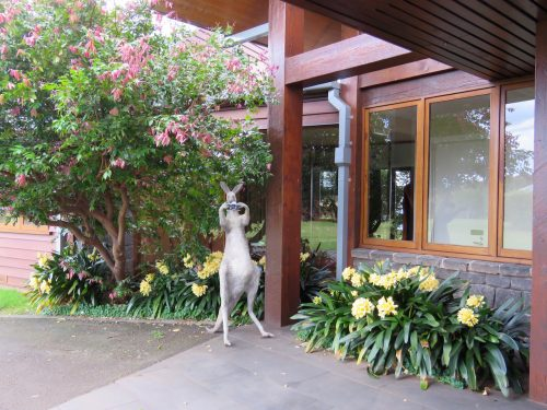 Spicers Peak Lodge Skippie the kangaroo