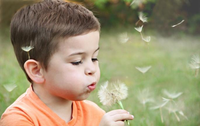 pollen causes allergic rhinitis