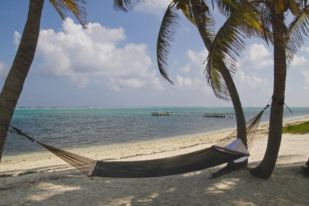 Hammock swinging between palm tress on Cayman Island